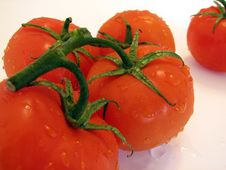 Free Tomatoes Royalty Free Stock Images - 533549