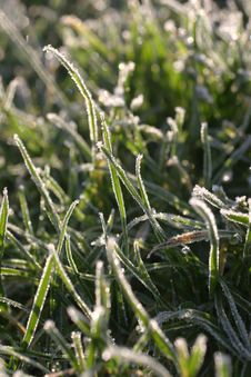 Free Frosty Grass Stock Photos - 533793