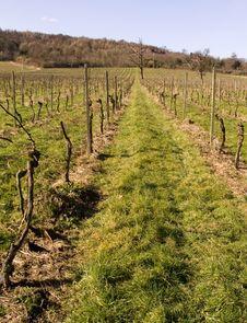 Free Winter Vines Royalty Free Stock Photos - 535478