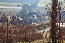 Free Swiss Vineyard Stock Photography - 537052