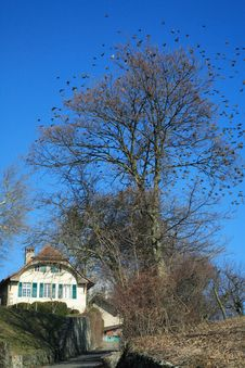 Free Cottage With A Lot Of Bird Around The Tree Royalty Free Stock Image - 537096