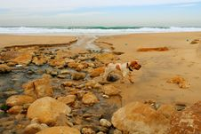 A Dog In The Beach Royalty Free Stock Image