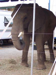 Free Elephant Front Royalty Free Stock Photos - 538808