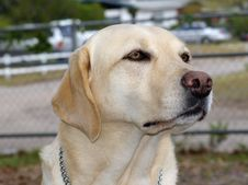 Free Guide Dog Stock Photos - 538973