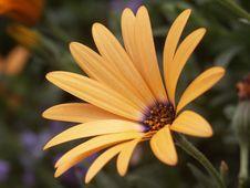 Free Orange Symphony Stock Images - 539484
