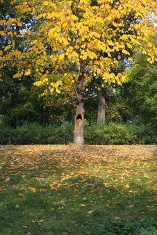 Free Autumn In A Park Royalty Free Stock Photos - 539828