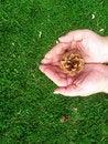 Free Holding Tomorrow S Tree Stock Photography - 5301502