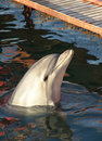 Free Trained Dolphin On Black Sea. Stock Image - 5304611