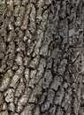 Free Cortex Old Tree Close-up. Royalty Free Stock Images - 5304909