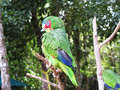 Free Parrot Stock Photography - 5308622