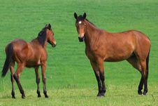 Free Horses Stock Photography - 5300092