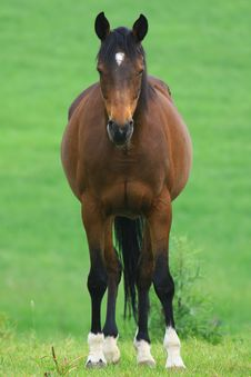Free Horses Stock Images - 5300124