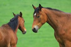 Free Horses Stock Images - 5300134