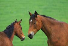 Free Horses Royalty Free Stock Photo - 5300145