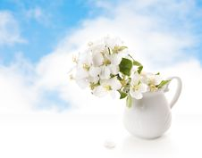 Free White Jug With A Branch Royalty Free Stock Image - 5300266