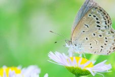Free Butterfly Stock Photo - 5301090