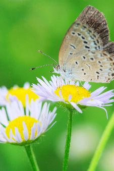 Free Butterfly Royalty Free Stock Image - 5301116