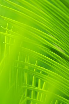 Free The Weaving Leaves Royalty Free Stock Photos - 5301468