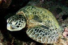 Free Turtle Stock Photos - 5302033