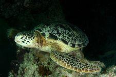 Free Turtle Stock Photos - 5302043