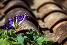 Free Flowers On Tile Roof Stock Images - 5302224