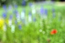 Free Floral Blur Royalty Free Stock Images - 5302289