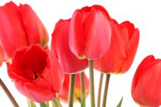 Free Bouquet Of Red Tulips Royalty Free Stock Photography - 5302487