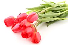 Free Bouquet Of Red Tulips Stock Images - 5302494