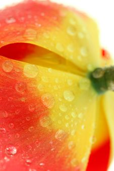 Free Red Tulip With Drops Macro Royalty Free Stock Images - 5302549