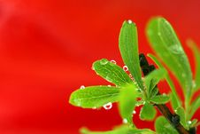 Free Green Leaf With Drops Stock Image - 5302571