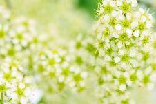 Free Spring Blossom Stock Image - 5302611