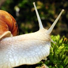 Free Snail Stock Images - 5304214