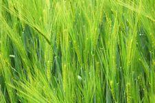 Free Green Meadow Stock Photo - 5304220