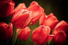 Free Flowers Background Stock Image - 5304411