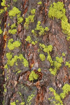 Free Moss-Covered Tree Bark Stock Images - 5304474