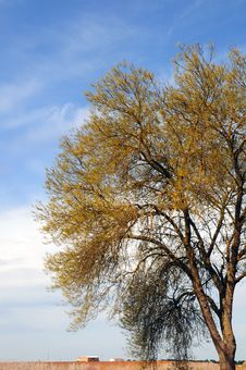 Free Serene Stock Image - 5304551
