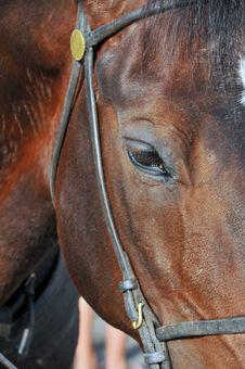 Free Horses Head Royalty Free Stock Image - 5304996
