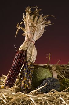 Free Corn Royalty Free Stock Images - 5305329