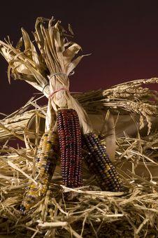 Free Corn Stock Image - 5305401