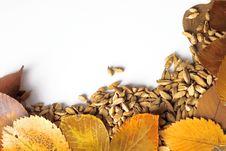 Free Autumn Frame Stock Image - 5305681