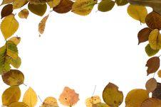 Free Autumn Frame Royalty Free Stock Photos - 5305828
