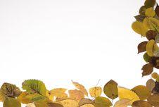 Free Autumn Frame Royalty Free Stock Photos - 5305838