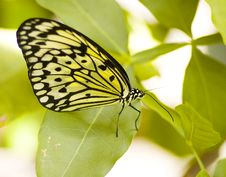Free Butterfly Stock Images - 5306084