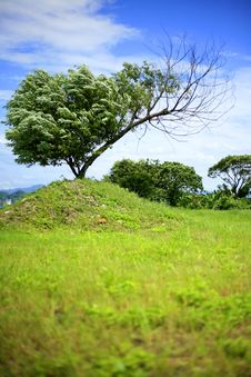 Free Tree And Blue Sky Stock Photography - 5306092
