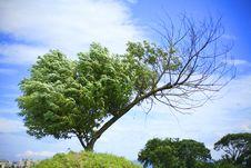Free A Tree And Blue Sky Stock Photos - 5306143