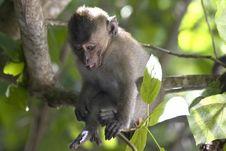 Free Baby Monkey Stock Image - 5306721
