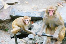 Free Monkey Stock Photo - 5306770