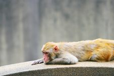 Free Monkey Stock Photography - 5306822