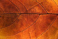 Free Autumn Leaf Stock Images - 5307194