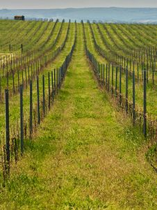Free Vineyards Landscape Stock Photos - 5307893